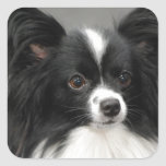 Papillon Dog  Stickers