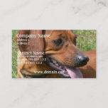 Picture of a Dachshund Business Card