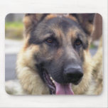 Picture of German Shepherd  Mouse Pad