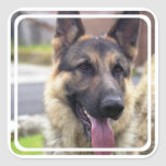 Picture of German Shepherd  Stickers