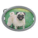 Poised Pug Belt Buckle