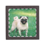Poised Pug Gift Box