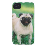 Poised Pug iPhone 4 Cover
