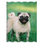 Poised Pug Notebook