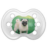 Poised Pug Pacifier