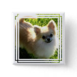 Pomeranian Puppies Pin