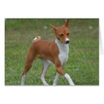 Prancing Basenji Dog Card