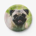 pug-13 paper plate