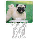 pug-30.jpg mini basketball backboard