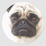 Pug Dog Sticker  Classic Round Sticker