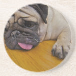 Pug with One Too Many Coasters