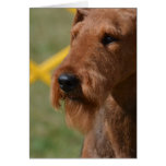 Really Cute Airedale Terrier
