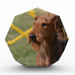 Really Cute Airedale Terrier Acrylic Award