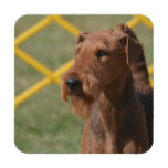 Really Cute Airedale Terrier Beverage Coaster