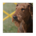 Really Cute Airedale Terrier Ceramic Tile