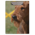 Really Cute Airedale Terrier Clipboard