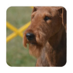 Really Cute Airedale Terrier Coaster