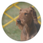 Really Cute Airedale Terrier Dinner Plate