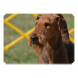 Really Cute Airedale Terrier Invitation