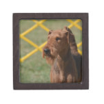 Really Cute Airedale Terrier Jewelry Box