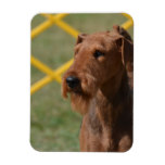 Really Cute Airedale Terrier Magnet