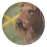 Really Cute Airedale Terrier Melamine Plate