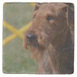 Really Cute Airedale Terrier Stone Coaster