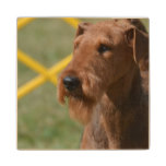 Really Cute Airedale Terrier Wooden Coaster