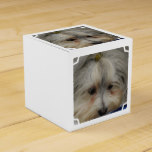 Resting Havanese Dog Favor Box