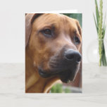 Rhodesian Ridgeback Greeting Card