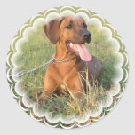 Rhodesian Ridgeback Rescue Stickers