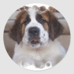 Saint Bernard Sticker