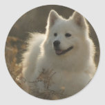 Samoyed Dog Breed Stickers