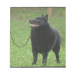 Schipperke Dog Notepad
