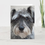 Schnauzer Dog Greeting Card