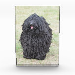 Shaggy Puli Dog Award