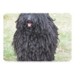 Shaggy Puli Dog Card