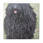 Shaggy Puli Dog Ceramic Tile