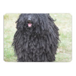 Shaggy Puli Dog Invitation