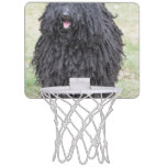 Shaggy Puli Dog Mini Basketball Backboard