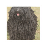 Shaggy Puli Dog Wood Print
