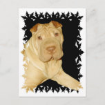 Shar Pei Dog Postcard
