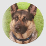 Shepherd Dog Sticker