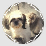 Shih-Tsu Dog Stickers
