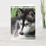 Siberian Husky Profile Greeting Card