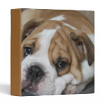 Sleeping Bulldog Binder