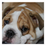 Sleeping Bulldog Poster