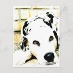 Sleeping Dalmatian Postcards