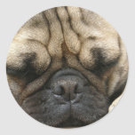 Sleeping Pug Sticker