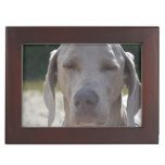 Sleepy Weimaraner Memory Box